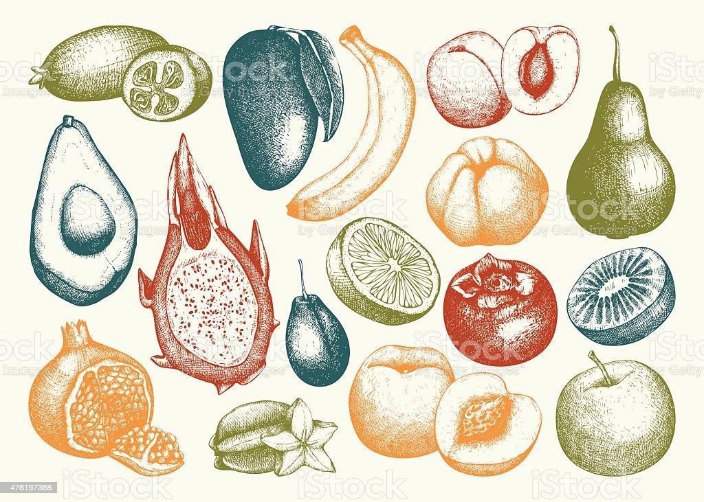 Vektor-Sammlung von Tinte hand drawn exotischen Garten und Obst – Vektorgrafik