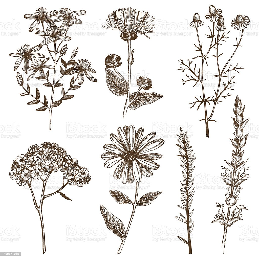Vector collection of ink hand drawn herbs vector art illustration
