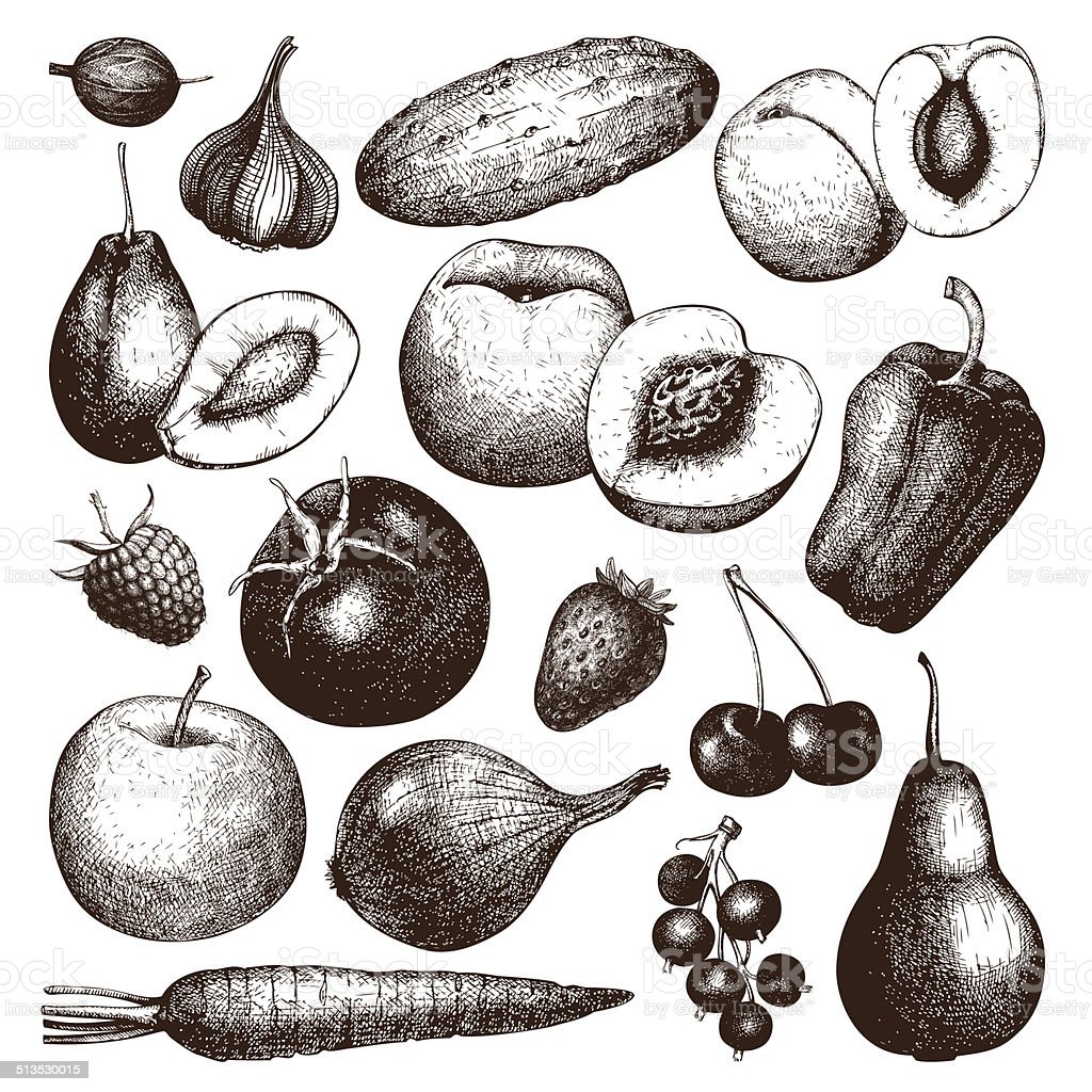 vector collection of ink hand drawn vegetables fruits and berries