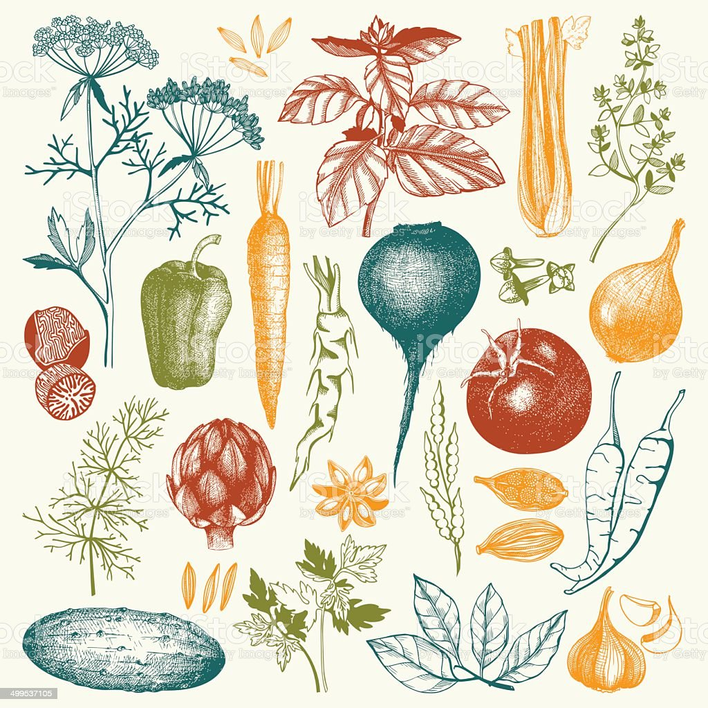 Vector collection of ink hand drawn vegetables, vector art illustration