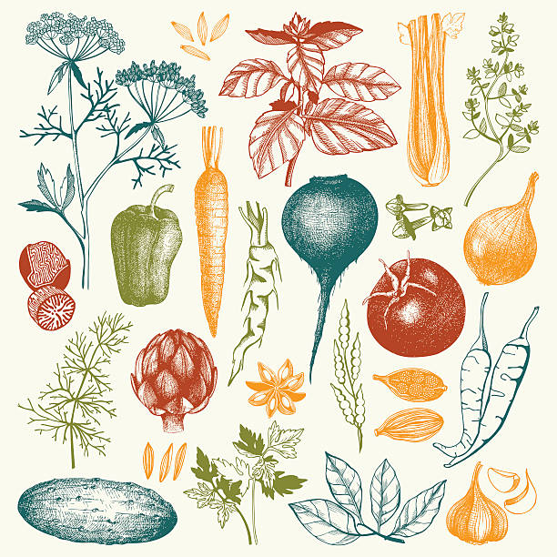 Vector collection of ink hand drawn vegetables, Vector collection of ink hand drawn vegetables, herbs and spices. Vintage healthy food illustration. Colored food drawings dill stock illustrations