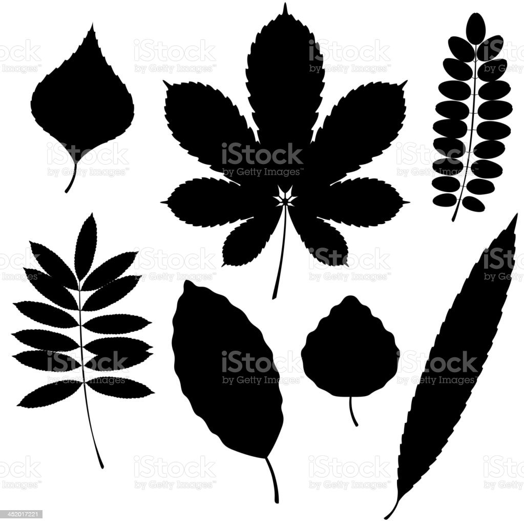 Vector Collection of Leaf Silhouettes isolated on white background vector art illustration