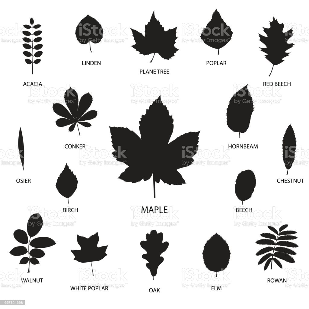 Vector collection of leaf silhouettes isolated on white background, vector illustration vector art illustration
