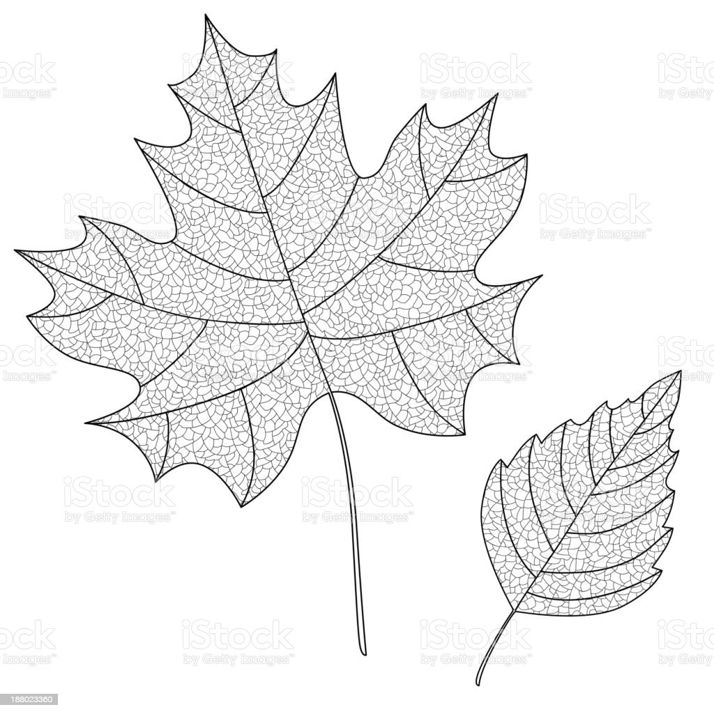 Vector Collection Of Leaf Silhouettes With Thin Veins Stock Vector ...