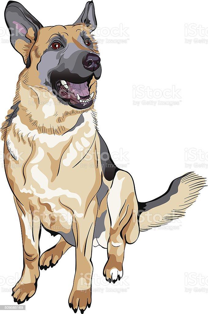 vector color sketch dog German shepherd breed vector art illustration
