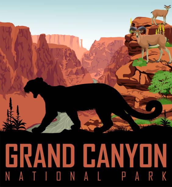 vektor colorado river im grand canyon national park mit mountain lion und bighorn schafe - nationalpark stock-grafiken, -clipart, -cartoons und -symbole