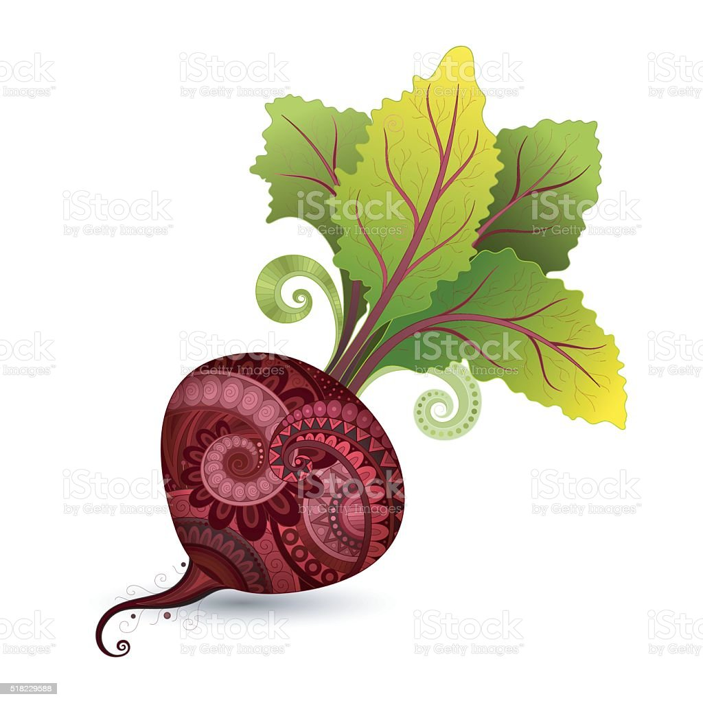 Vector Colored Decorative Beet with Top vector art illustration