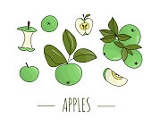 Vector colored set of hand drawn apples. Illustration of autumn harvest. Home made food theme.