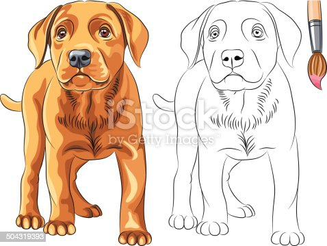Vektormalbuch Rote Welpen Hund Labrador Retriever Stock Vektor Art ...