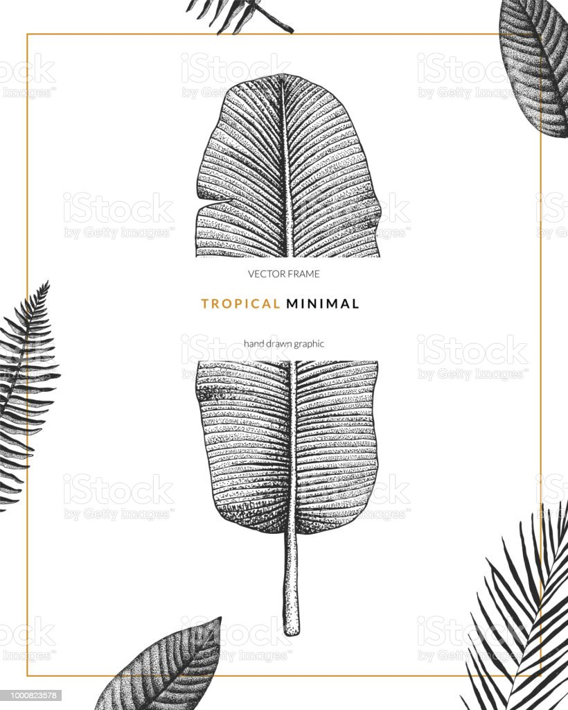 Vector contemporary greeting card with tropical graphics in vintage vector contemporary greeting card with tropical graphics in vintage style hand drawn exotic plant template m4hsunfo