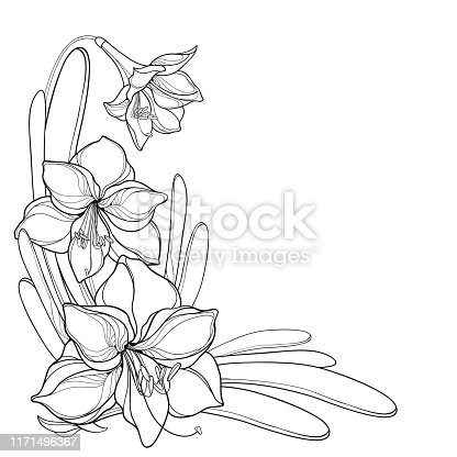 Lily Flowers And Line Drawing Vector Background Material Free Vector