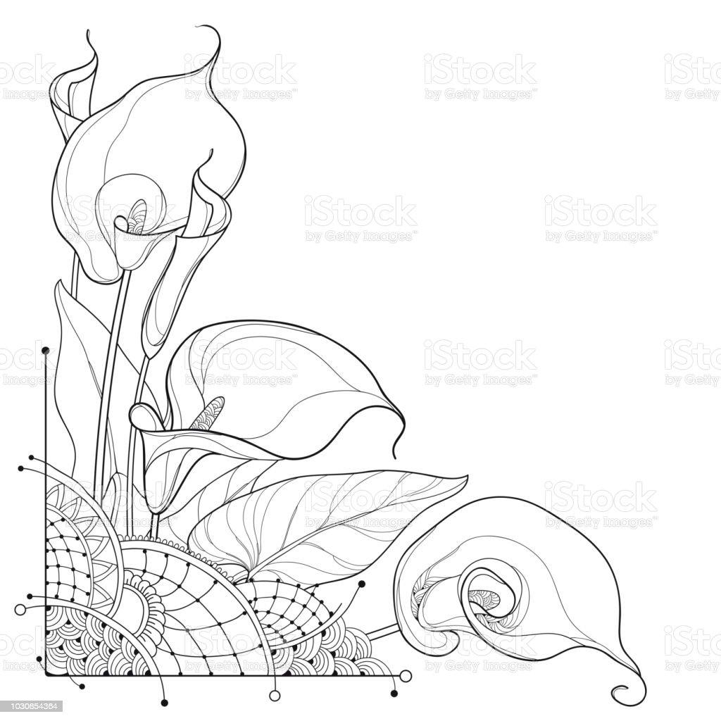 Vector Corner Bouquet Of Outline Calla Lily Flower Or Zantedeschia