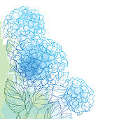 Vector corner bouquet of outline Hydrangea or Hortensia flower bunch and ornate foliage in blue and green on the pastel textured background.