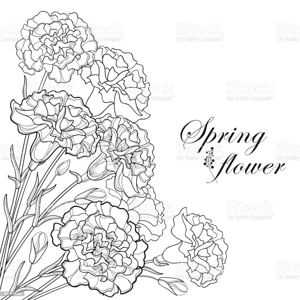 Vector corner bouquet with outline black Carnation or Clove flower, bud and leaf isolated on white background.