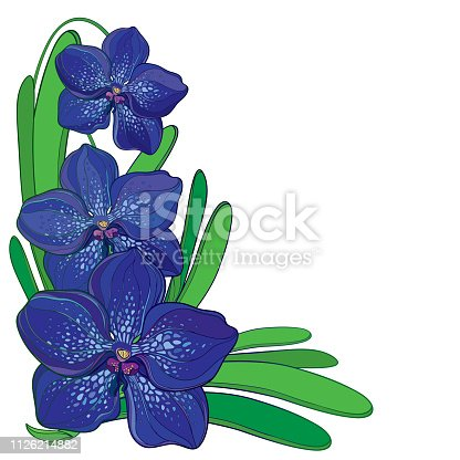Vector corner bouquet with outline blue Vanda orchid flower and green leaf isolated on white background. Epiphyte tropical flower. Exotic ornate Vanda in contour style for summer design.