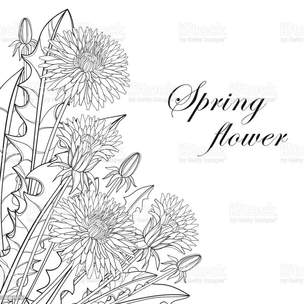 Vector corner bouquet with outline dandelion flower bud and leaves vector corner bouquet with outline dandelion flower bud and leaves in black isolated on white mightylinksfo