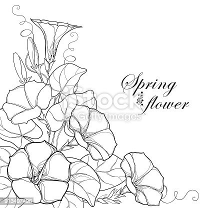 Vector Corner Bouquet With Outline Ipomoea Or Morning