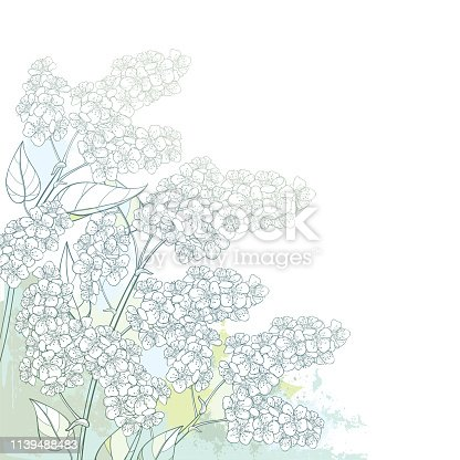 istock Vector corner branch with outline blossom Prunus padus or Bird cherry flower bunch with bud and leaf in pastel green on the white background. 1139488483