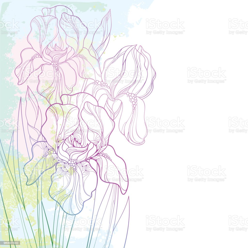 Vector corner composition with outline bouquet of pink iris flower vector corner composition with outline bouquet of pink iris flower bud and leaf on the izmirmasajfo
