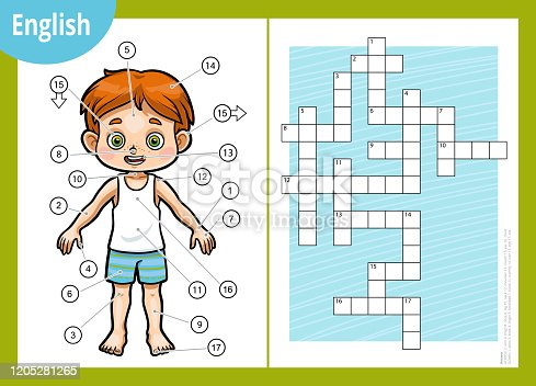 Vector colorful crossword in English, education game for children about the human body. My body parts for a boy