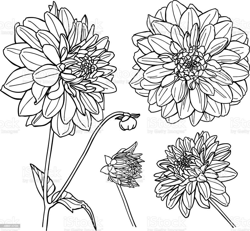Flower Line Art Images: Vector Dahlia Flower Set Line Art Stock Illustration