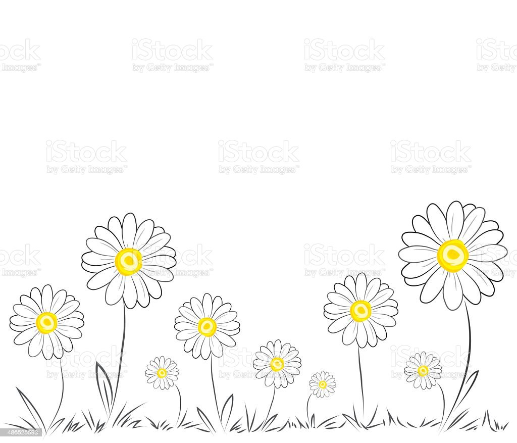 Vector Daisies vector art illustration