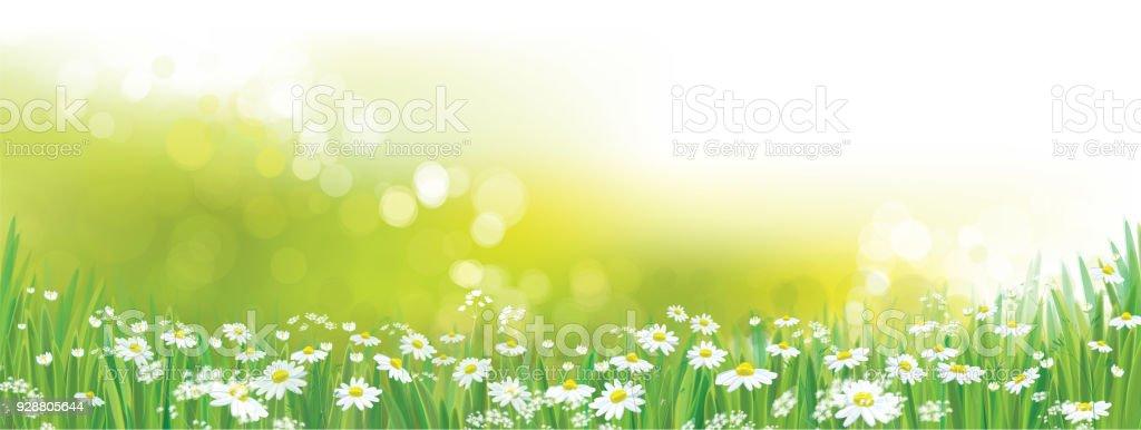 Vektör papatya çiçek alanı. vektör sanat illüstrasyonu