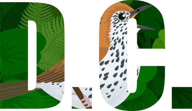 ilustrações de stock, clip art, desenhos animados e ícones de vector d.c.  - american district of columbia word with wood thrush (hylocichla mustelina) - song thrush
