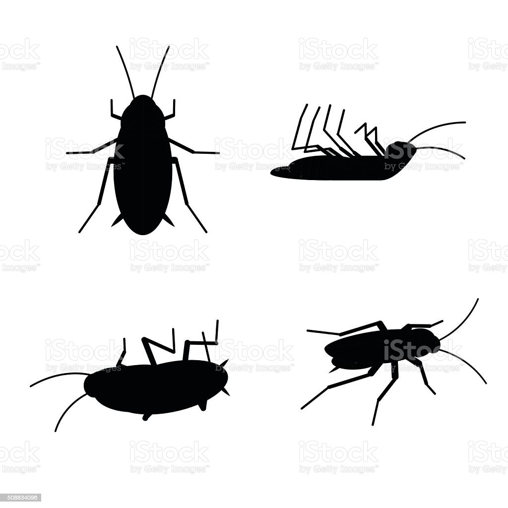 royalty free cockroach clip art vector images illustrations istock rh istockphoto com cockroach clipart black and white cockroach clipart free