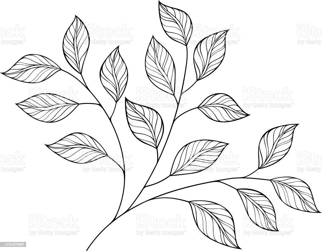 Contour Line Drawing Leaves : Vector decorative contour branch with leaves stock