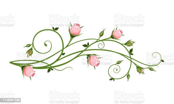 Vector decorative design element with pink rosebuds vector id1148997396?b=1&k=6&m=1148997396&s=612x612&h=tbf28 22wxbtf6qolds1hievud xetp cbfn pyx0f4=