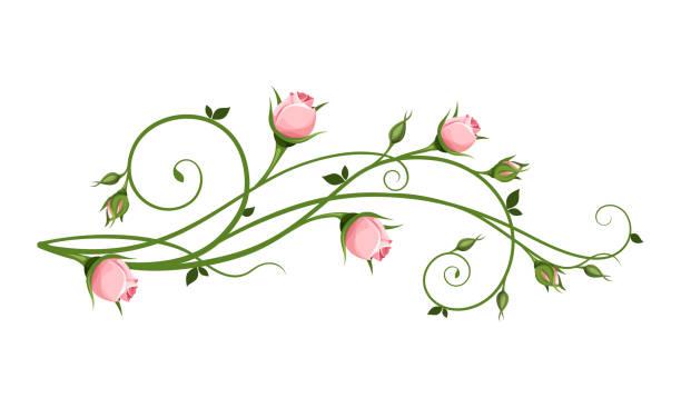 Vector dekoratives Gestaltungselement mit rosa Rosenbällen. – Vektorgrafik