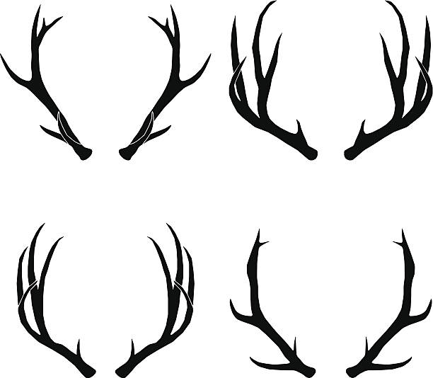 vector deer antlers collection - deer antlers stock illustrations, clip art, cartoons, & icons