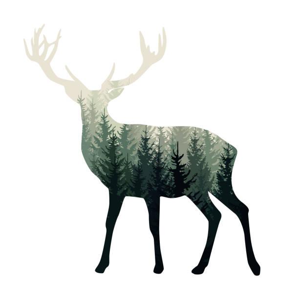vector hirsch silhouette mit nebligen wald drin - wilde natur, abenteuer-illustration - hirsch stock-grafiken, -clipart, -cartoons und -symbole