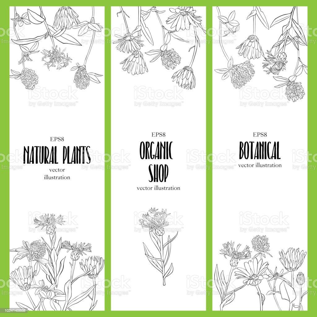 Vektordesignvorlage Mit Wilden Blumen Stock Vektor Art Und