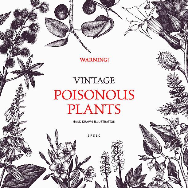 vektor-design mit handgezeichnet komplizierter pflanzen. - eisenhut stock-grafiken, -clipart, -cartoons und -symbole