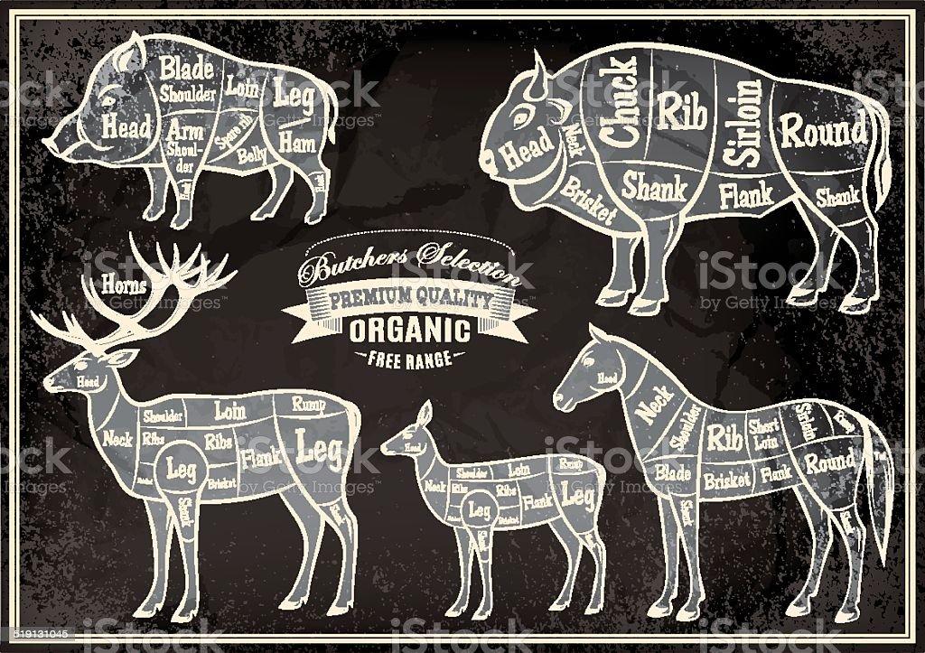 vector diagram cut carcasses boar bison deer horse stock. Black Bedroom Furniture Sets. Home Design Ideas