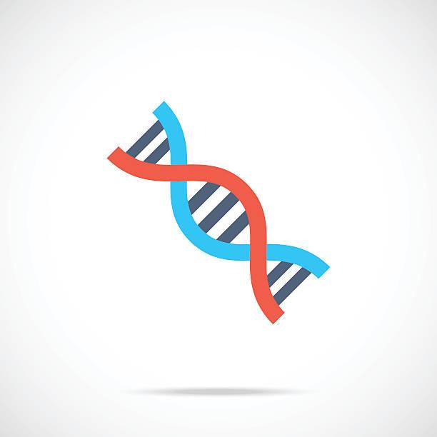 Vector DNA icon. Modern flat design vector illustration vector art illustration