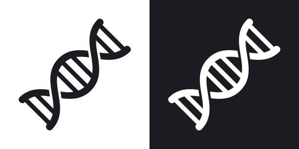 ilustraciones, imágenes clip art, dibujos animados e iconos de stock de icono de vector dna. versión de dos tonos sobre fondo blanco y negro - adn
