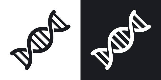 Vector DNA icon. Two-tone version on black and white background vector art illustration