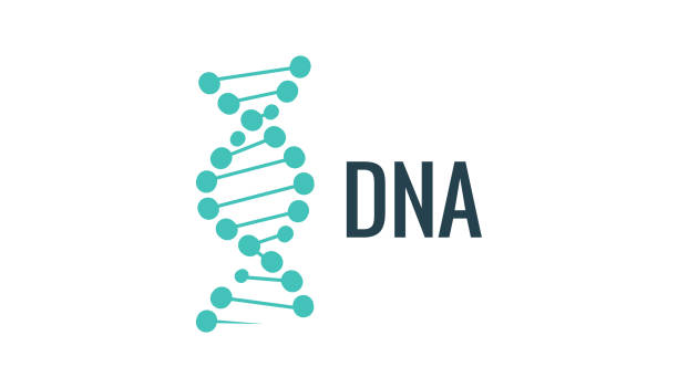 Vector DNA logo icon. Gene life or mollecule design. Biology concept illustration Vector DNA logo icon. Gene life or mollecule design. Biology concept illustration. dna stock illustrations