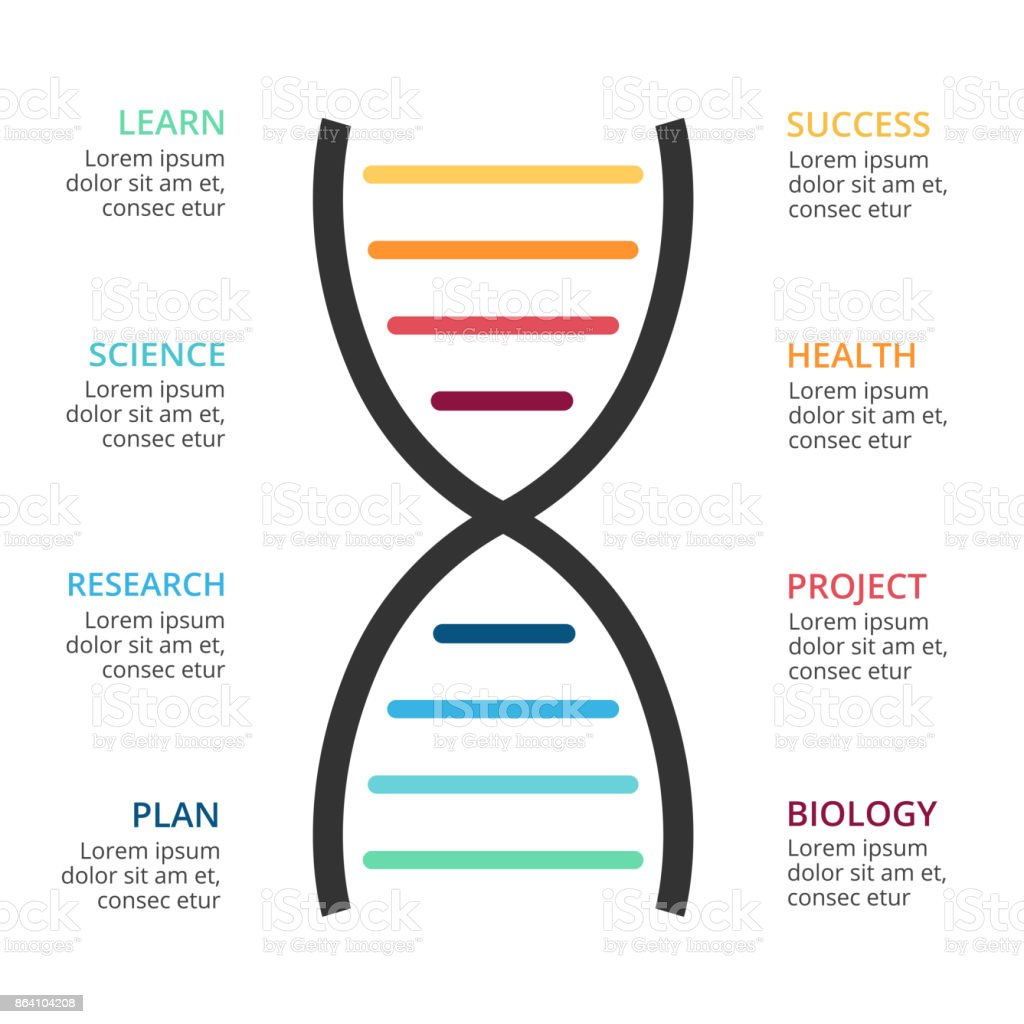 Vector DNA science infographic, medical diagram, healthcare graph, hospital presentation, chart. Concept with 8 options, parts, steps, processes royalty-free vector dna science infographic medical diagram healthcare graph hospital presentation chart concept with 8 options parts steps processes stock vector art & more images of arrow symbol