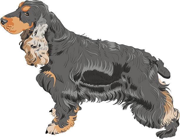 vektor hund schwarze englischer cocker spaniel rasse - hundehaarbögen stock-grafiken, -clipart, -cartoons und -symbole