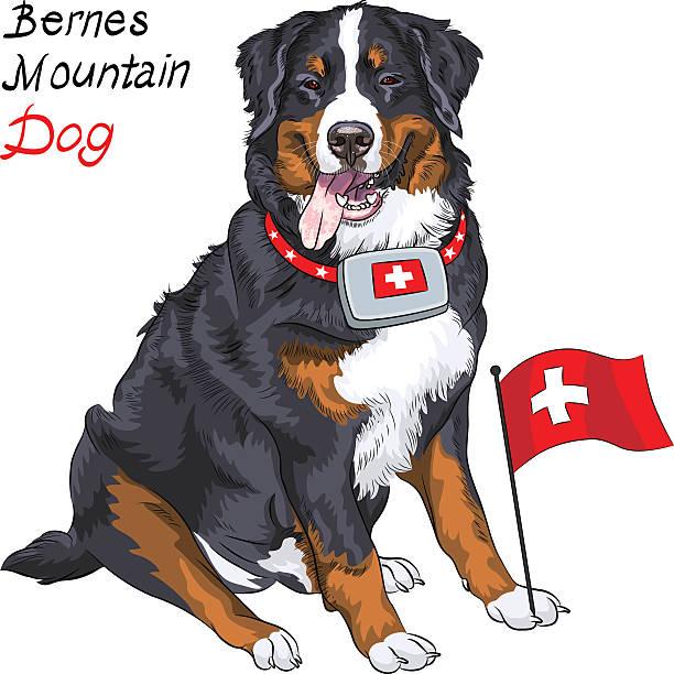 Vector dog breed Bernese mountain dog smiling vector art illustration