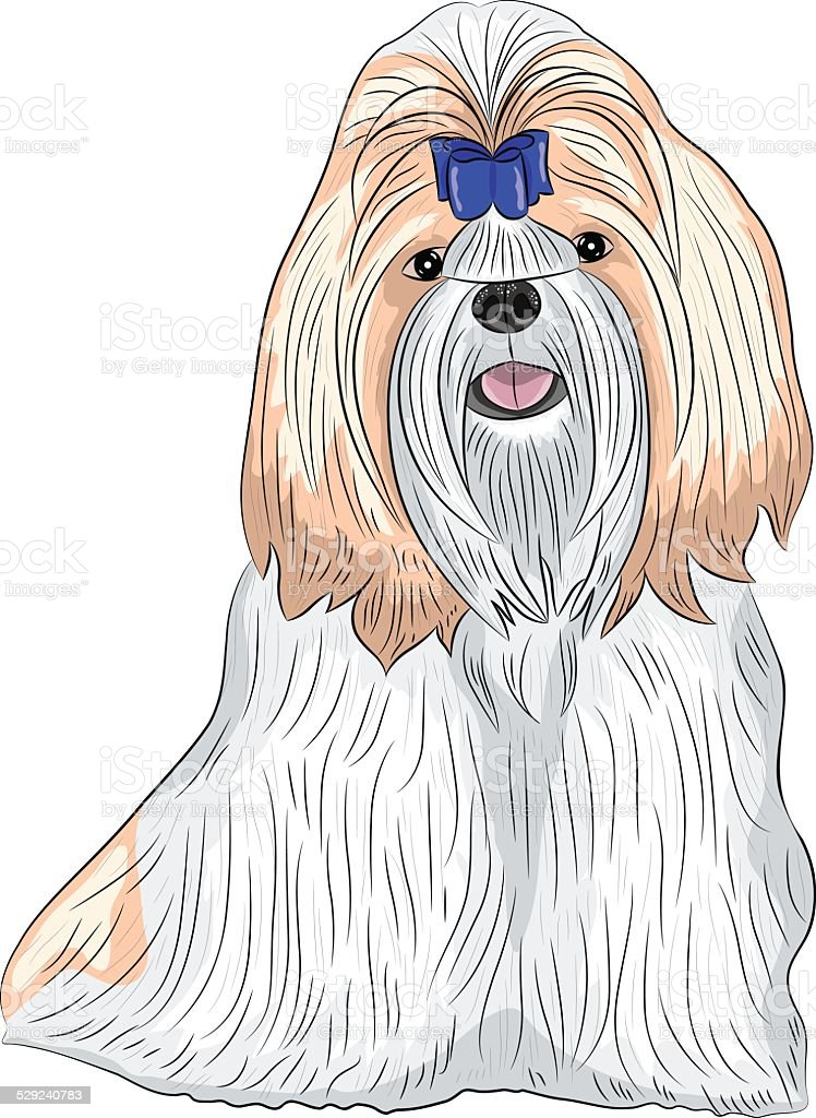 Vector Dog Breed Shih Tzu Stock Illustration Download Image Now
