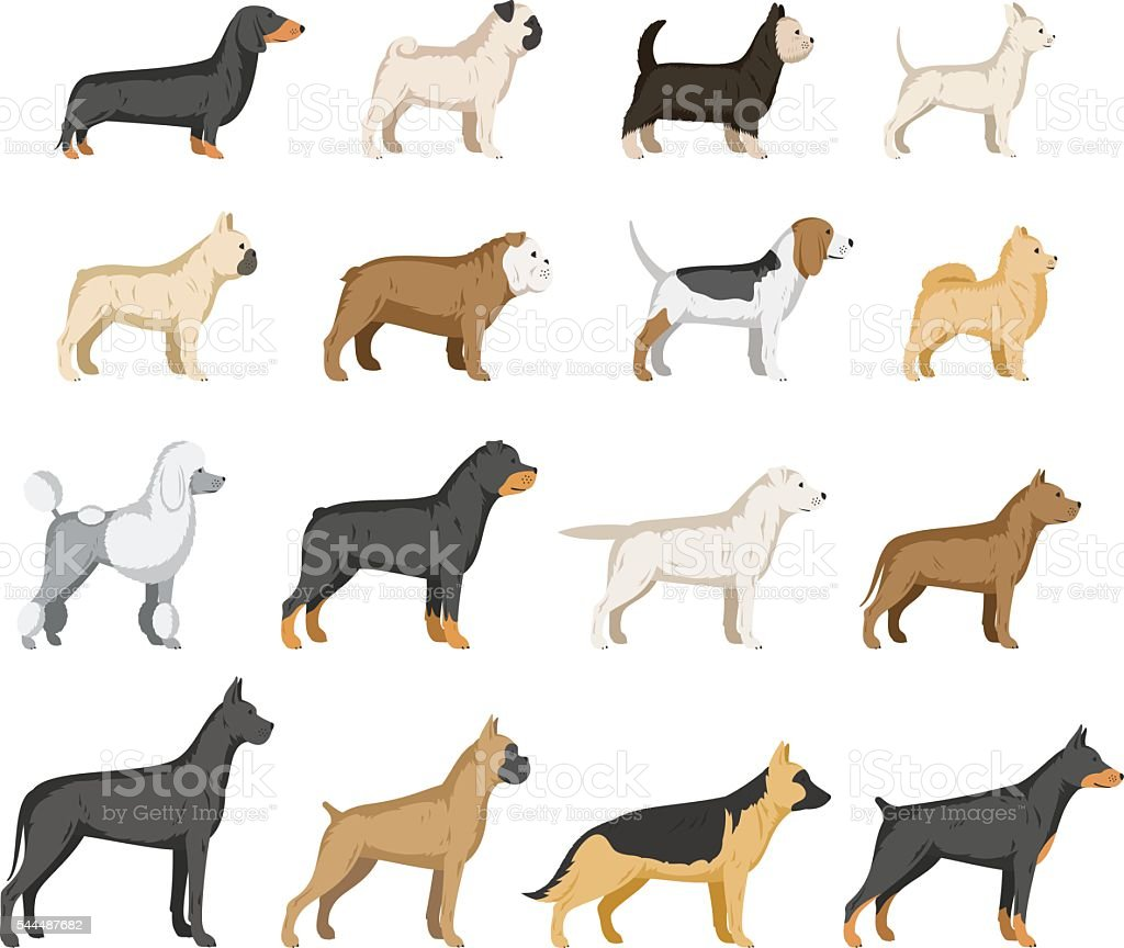 Vector dog breeds collection isolated on white vector art illustration