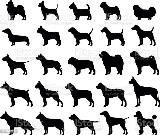 Vector dog breeds silhouettes collection isolated on white vector id517675794?b=1&k=6&m=517675794&s=612x612&h=kkxbfmb8tkdccxxivy1rcdrgqsi1gmuml4yqpcmhuko=