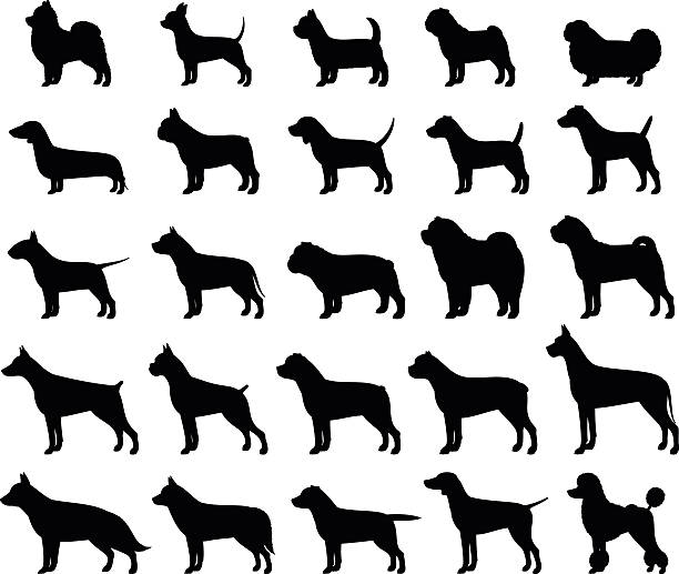 Vector dog breeds silhouettes collection isolated on white vector art illustration