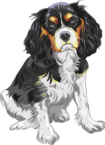 vektor hund cavalier king charles spaniel bre - hundehaarbögen stock-grafiken, -clipart, -cartoons und -symbole