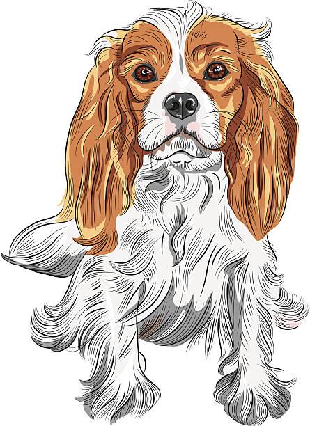 vektor hund cavalier king charles spaniel rasse - hundehaarbögen stock-grafiken, -clipart, -cartoons und -symbole